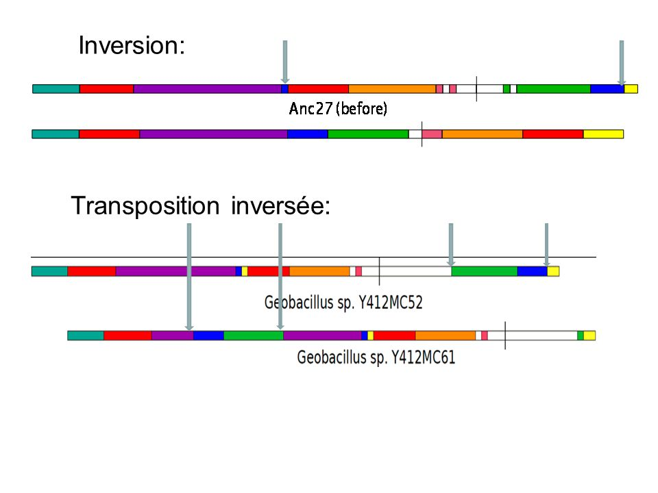 Inversion: Transposition inversée: