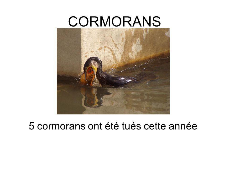 CORMORANS 5 cormorans ont été tués cette année