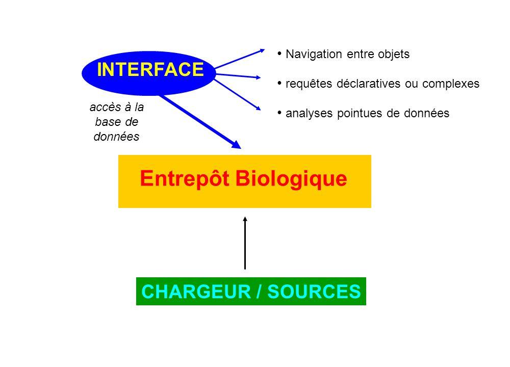 INTERFACE CHARGEUR / SOURCES • Navigation entre objets • requêtes déclaratives ou complexes • analyses pointues de données accès à la base de données