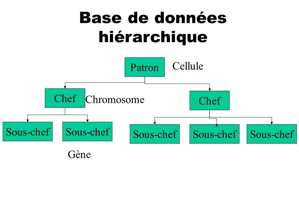 Base de données hiérarchique Patron Sous-chef Chef Sous-chef Cellule Chromosome Gène