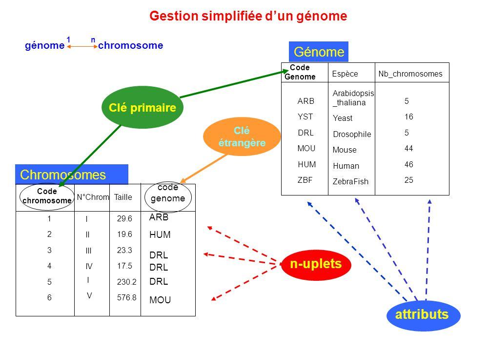 Gestion simplifiée d'un génome n-uplets génome chromosome 1 n Génome Espèce Code Genome Nb_chromosomes Arabidopsis _thaliana Yeast Drosophile Mouse Hu