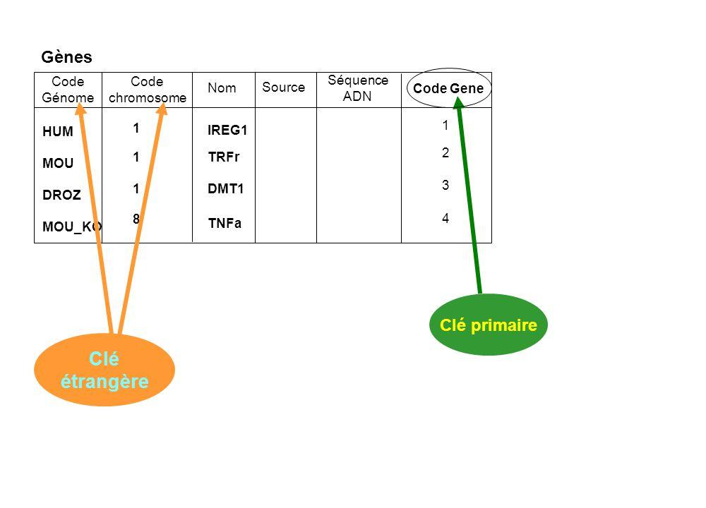 Gènes Code chromosome IREG1 TRFr DMT1 TNFa 11181118 Nom Code Génome Source Séquence ADN HUM MOU DROZ MOU_KO Code Gene Clé étrangère Clé primaire 12341