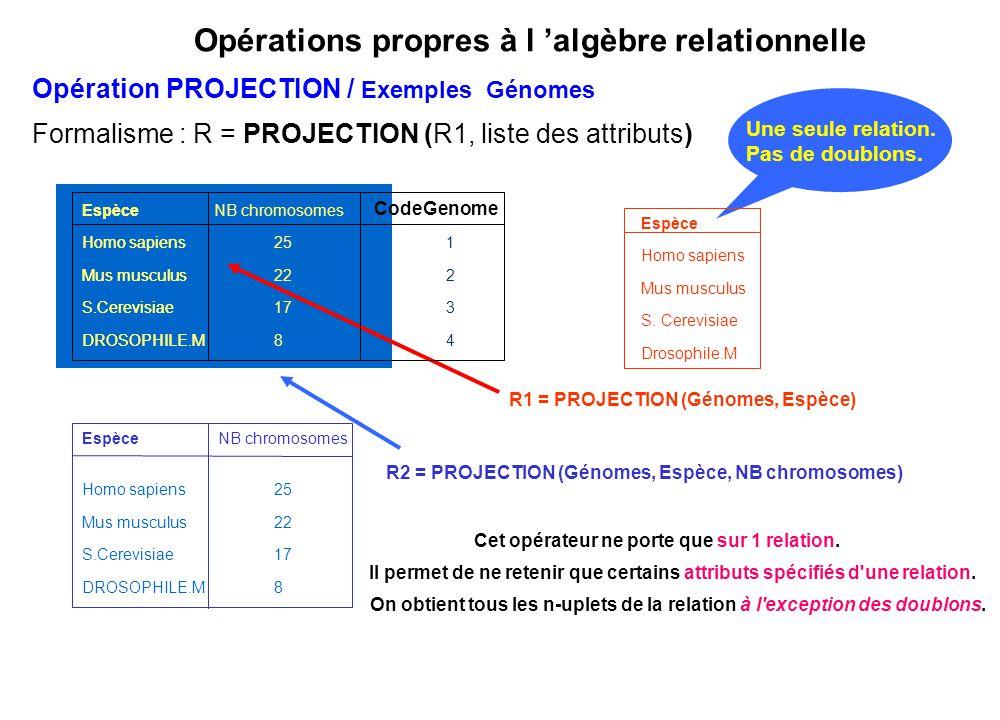 Opérations propres à l 'algèbre relationnelle Une seule relation. Pas de doublons. Espèce NB chromosomes Homo sapiens25 Mus musculus22 S.Cerevisiae17