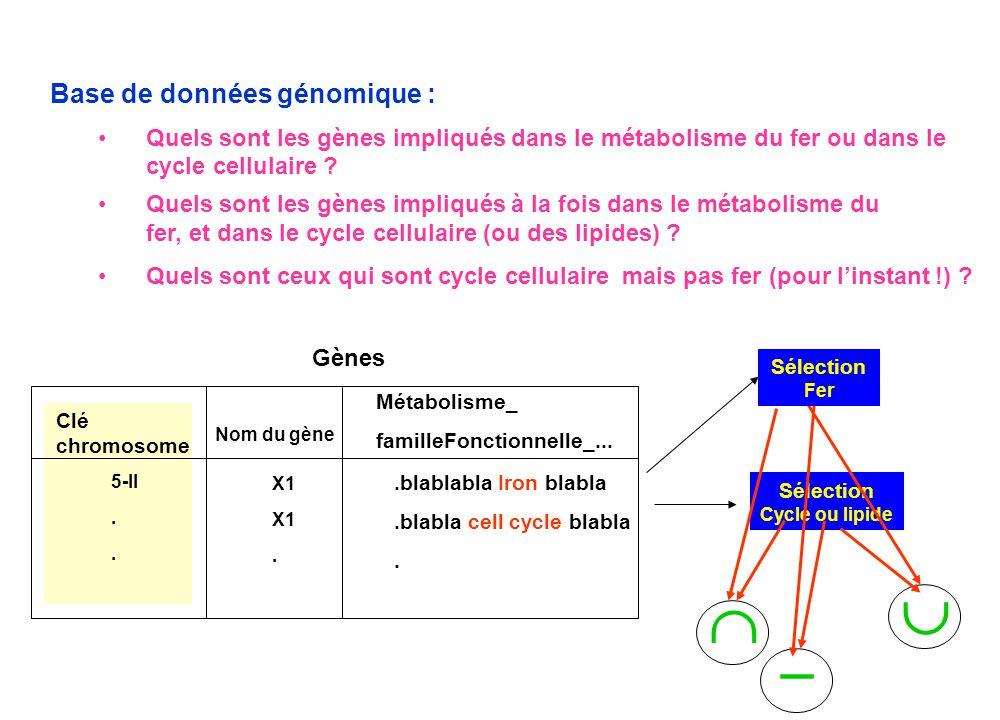 Base de données génomique : • Quels sont les gènes impliqués dans le métabolisme du fer ou dans le cycle cellulaire ? Gènes Clé chromosome X1. 5-II. N