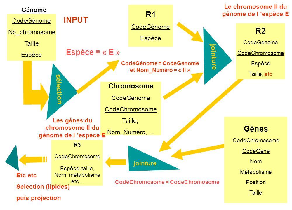 CodeGénome = CodeGénome et Nom_Numéro = « II » Chromosome CodeGenome CodeChromosome Taille, Nom_Numéro,... jointure R1 CodeGénome Espèce Espèce = « E