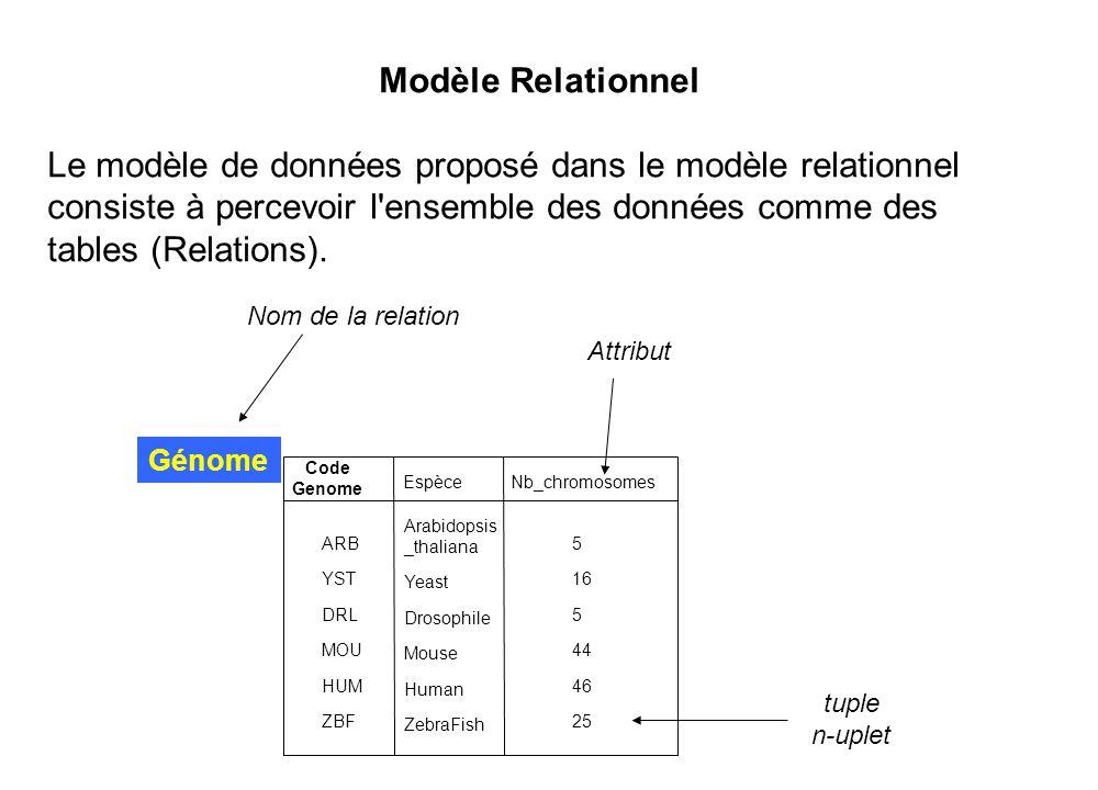 Modèle Relationnel Le modèle de données proposé dans le modèle relationnel consiste à percevoir l'ensemble des données comme des tables (Relations). G