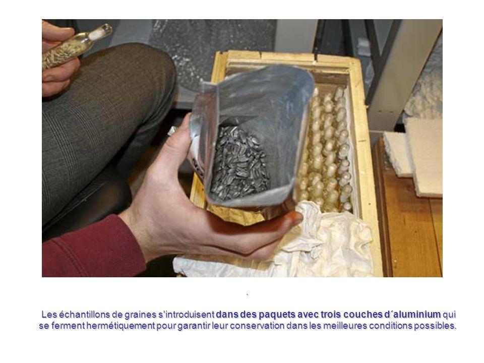 Les techniciens doivent classifier chaque échantillon, en spécifiant son espèce, provenance et ancienneté. Toute l'information se transcrit sur un web
