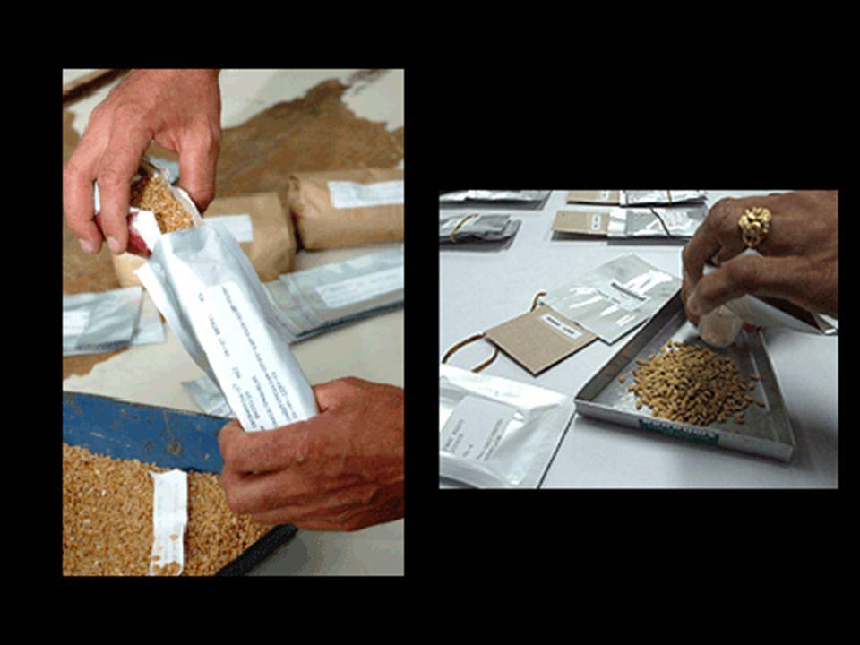 Actuellement, déjà plus de 1.000 banques de graines existent au monde. Cependant, plusieurs d'elles, surtout dans les pays en voie de développement, s