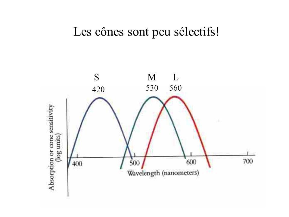 Les cônes sont peu sélectifs! 420 530560 S M L