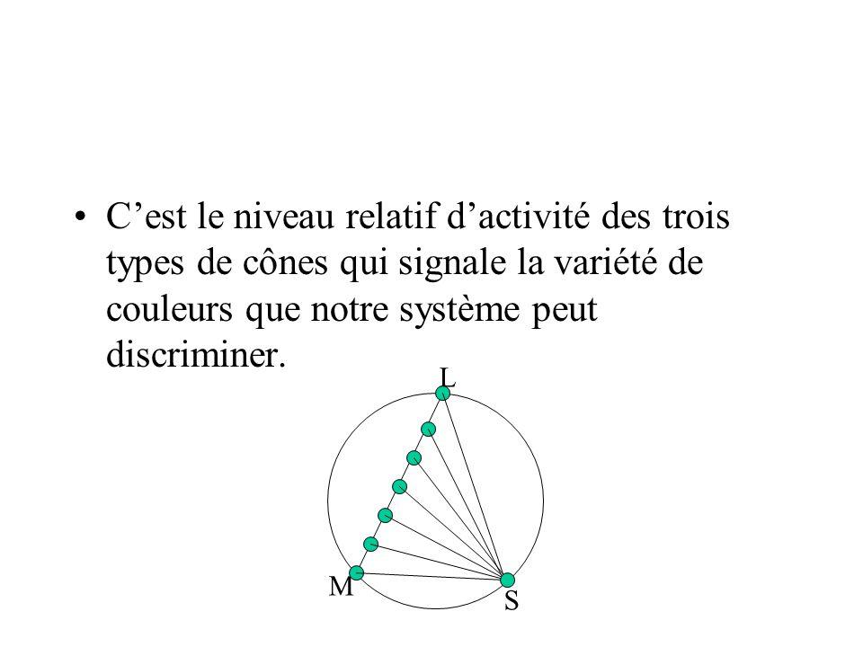 •C'est le niveau relatif d'activité des trois types de cônes qui signale la variété de couleurs que notre système peut discriminer. M L S