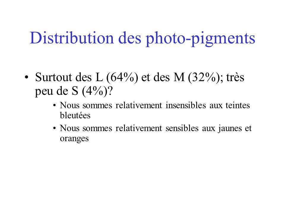 Distribution des photo-pigments •Surtout des L (64%) et des M (32%); très peu de S (4%)? •Nous sommes relativement insensibles aux teintes bleutées •N