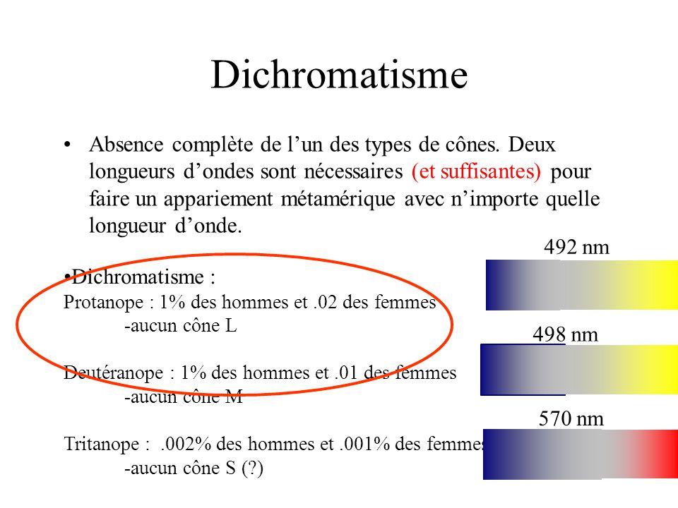 Dichromatisme •Absence complète de l'un des types de cônes. Deux longueurs d'ondes sont nécessaires (et suffisantes) pour faire un appariement métamér