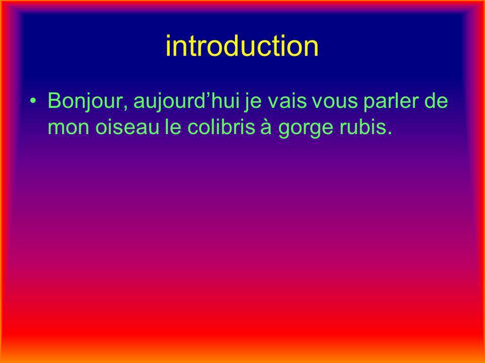 introduction •Bonjour, aujourd'hui je vais vous parler de mon oiseau le colibris à gorge rubis.