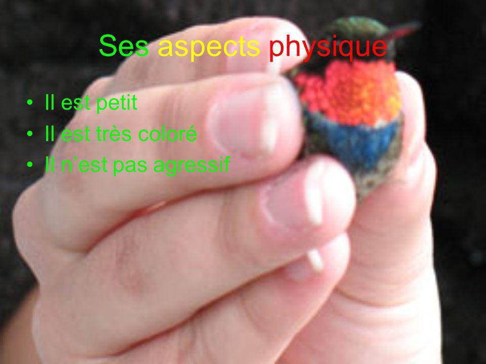 Ses aspects physique •Il est petit •Il est très coloré •Il n'est pas agressif