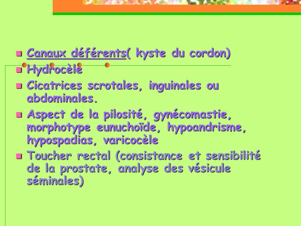  Canaux déférents( kyste du cordon)  Hydrocèle  Cicatrices scrotales, inguinales ou abdominales.