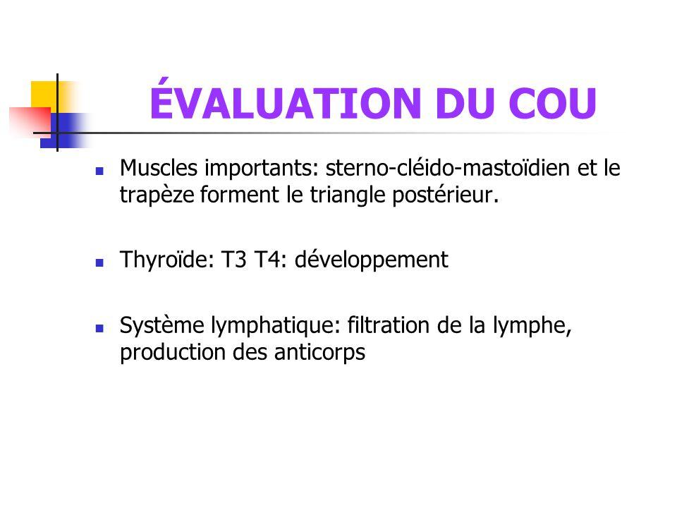 ÉVALUATION DU COU  Muscles importants: sterno-cléido-mastoïdien et le trapèze forment le triangle postérieur.  Thyroïde: T3 T4: développement  Syst
