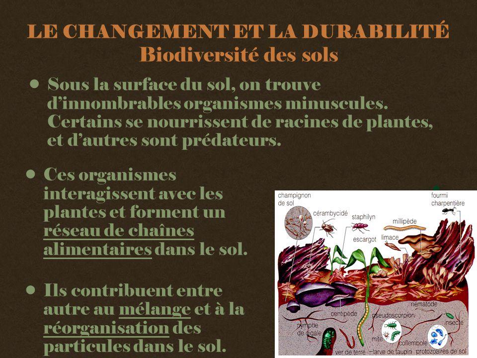 LE CHANGEMENT ET LA DURABILITÉ Biodiversité des sols •Sous la surface du sol, on trouve d'innombrables organismes minuscules.