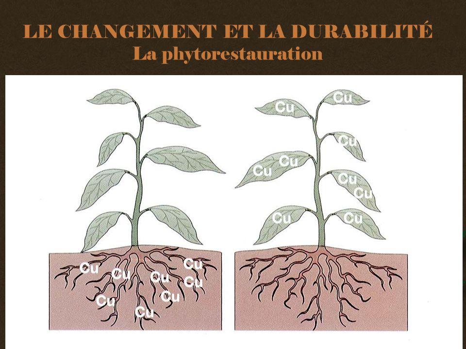 LE CHANGEMENT ET LA DURABILITÉ La phytorestauration