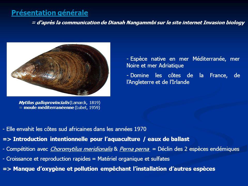 Mytilus galloprovincialis (Lamarck, 1819) = moule méditerranéenne (Lubet, 1959) Présentation générale = d'après la communication de Dianah Nangammbi s