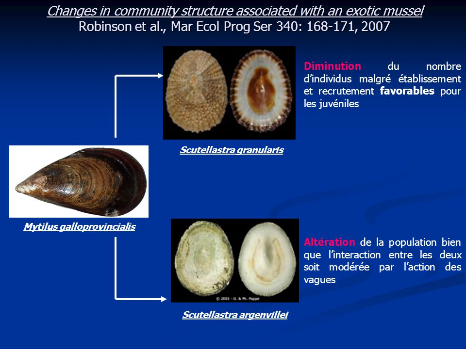 Merci pour votre attention Changes in South African rocky intertidal invertebrate community structure associated with the invasion of the mussel Mytilus galloprovincialis.