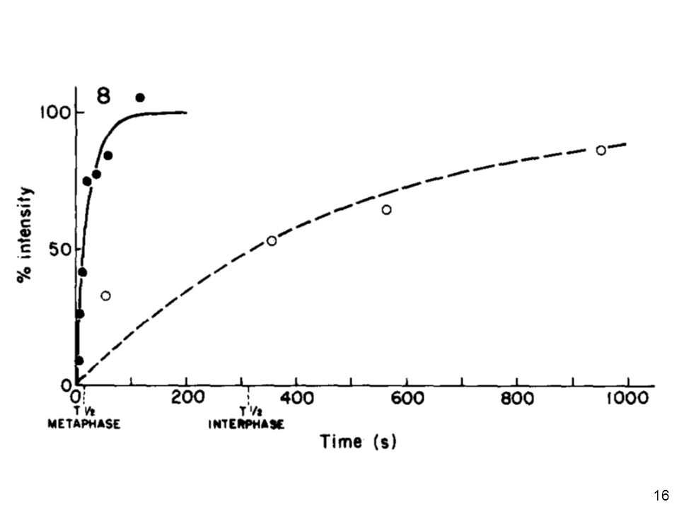 16 Saxton, WM J Cell Biol 99:2175, 1984 •FIGURE 8 Comparison of FRAP rates for a metaphase and an interphase cell. Examples of relative fluorescence i