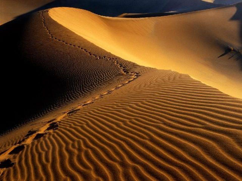 Le désert de Namib qui donne son nom à l'état de Namibie, s'étend sur 2100 Km au large de la côte d'Afrique australe.