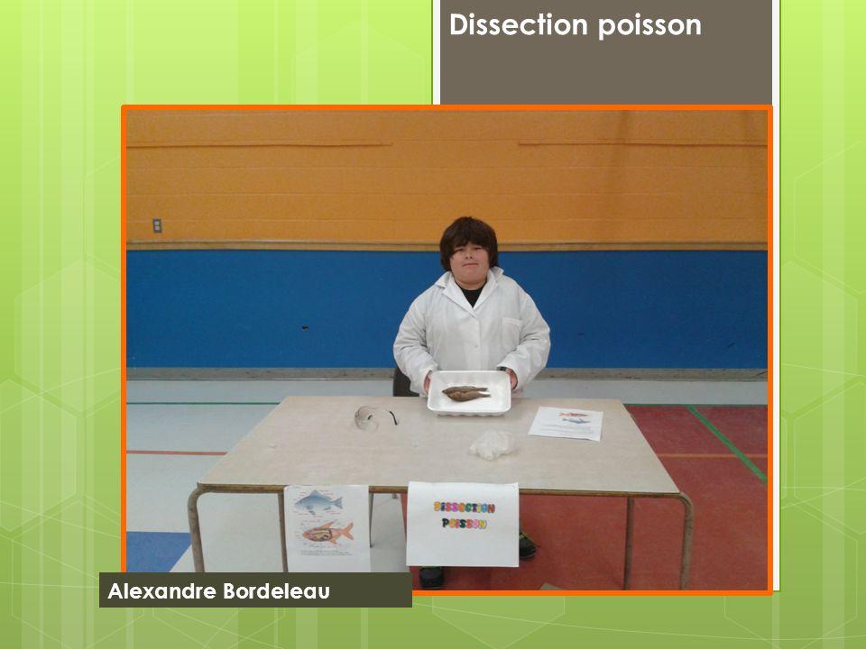Dissection poisson Alexandre Bordeleau