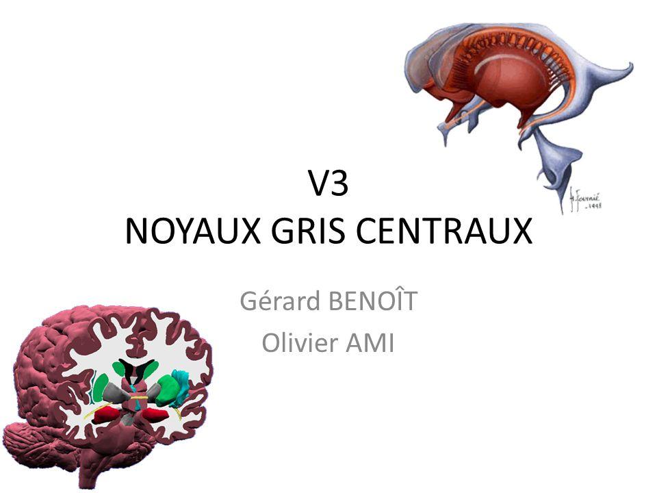 V3 et noyaux gris centraux •Télencéphale=hémisphères •Diencéphale=thalamus, nx gris … pro encéphale •mésencéphale mésencéphale •Métencéphale=pont+cervelet •Myélencéphale=bulbe rhombencéphale