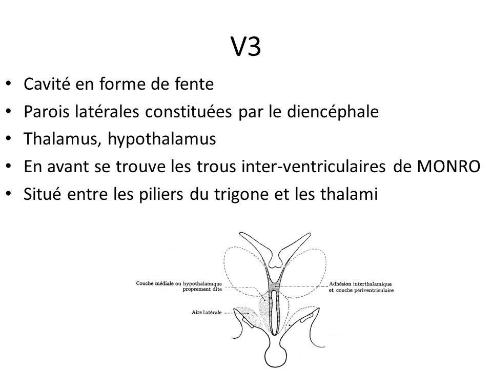 V3 • Cavité en forme de fente • Parois latérales constituées par le diencéphale • Thalamus, hypothalamus • En avant se trouve les trous inter-ventricu