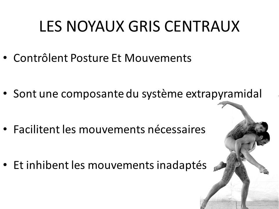 LES NOYAUX GRIS CENTRAUX • Contrôlent Posture Et Mouvements • Sont une composante du système extrapyramidal • Facilitent les mouvements nécessaires •