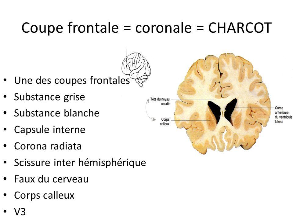 Coupe frontale = coronale = CHARCOT • Une des coupes frontales • Substance grise • Substance blanche • Capsule interne • Corona radiata • Scissure int
