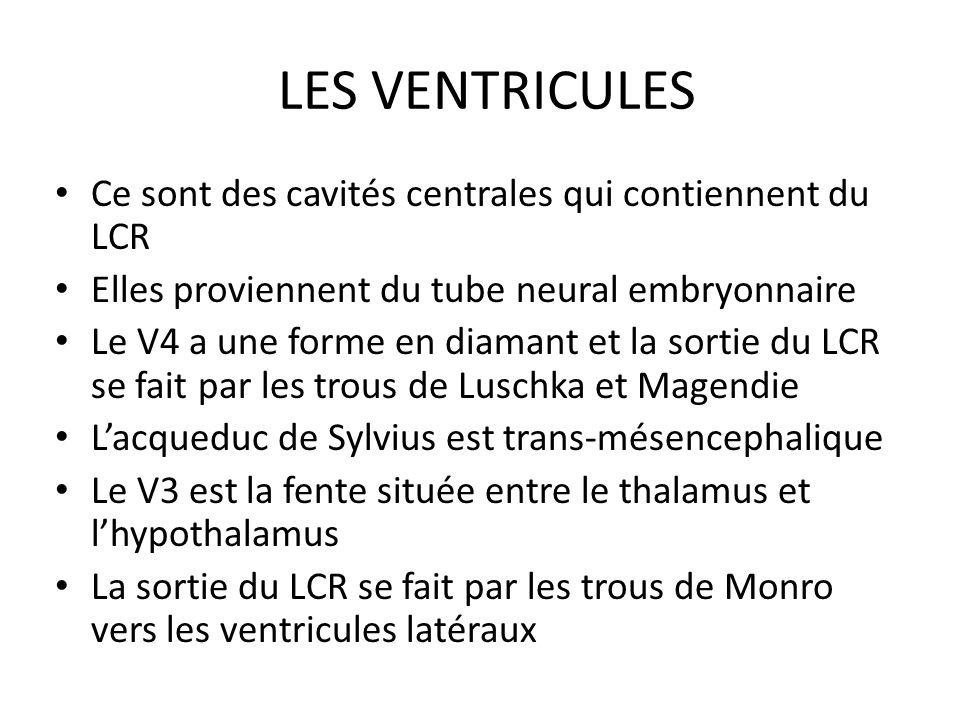 LES VENTRICULES • Ce sont des cavités centrales qui contiennent du LCR • Elles proviennent du tube neural embryonnaire • Le V4 a une forme en diamant