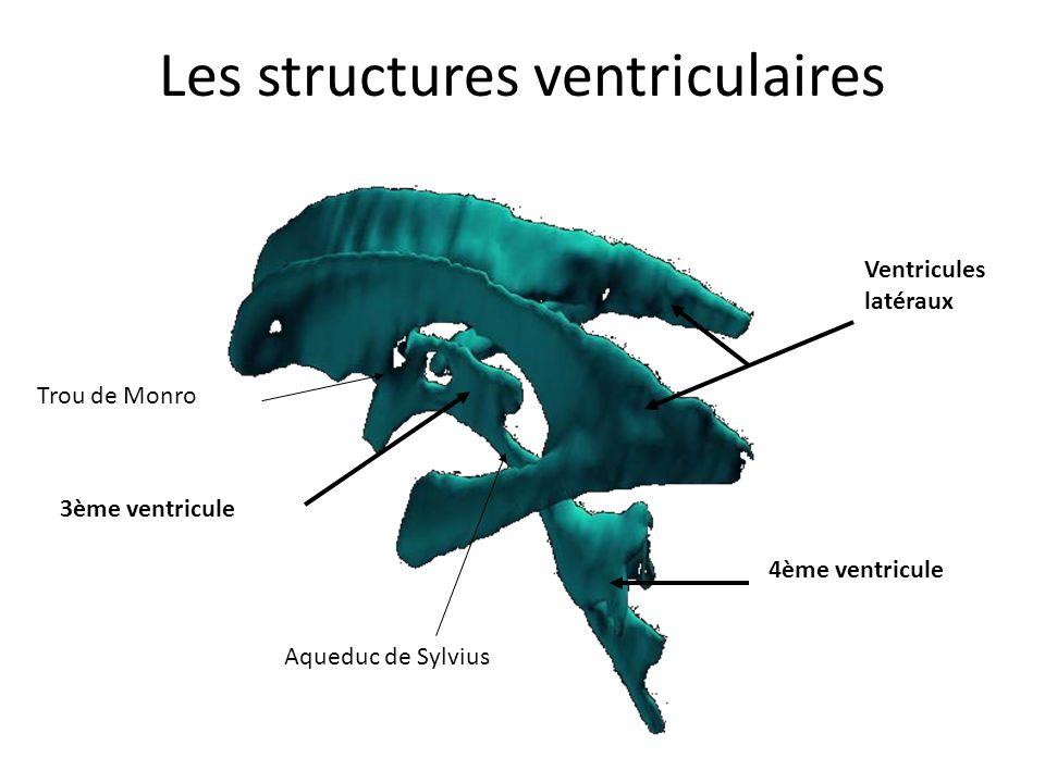• Le 3ème ventricule – Il est situé dans le diencéphale – Il se prolonge par l'aqueduc de Sylvius – Sa paroi latérale est constituée par le thalamus