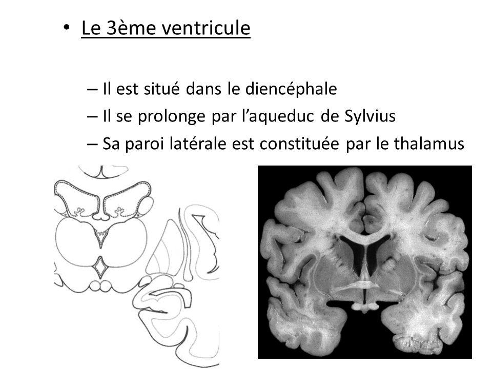 • Le 4ème ventricule – Un toit recouvert par le cervelet – Un plancher – Carrefour essentiel de la circulation du LCR