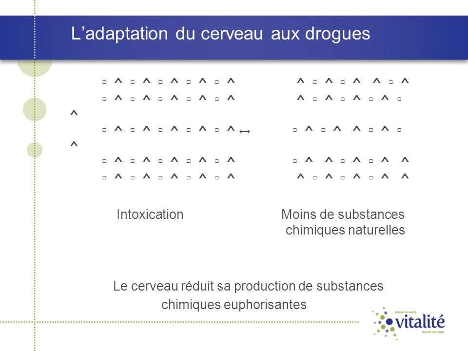 L'adaptation du cerveau aux drogues ▫ ^ ▫ ^ ▫ ^ ▫ ^ ▫ ^ ^ ▫ ^ ▫ ^ ^ ▫ ^ ▫ ^ ▫ ^ ▫ ^ ▫ ^ ▫ ^ ^ ▫ ^ ▫ ^ ▫ ^ ▫ ^ ▫ ^ ▫ ^ ▫ ^ ▫ ^ ▫ ^ ↔ ▫ ^ ▫ ^ ^ ▫ ^ ▫ ^