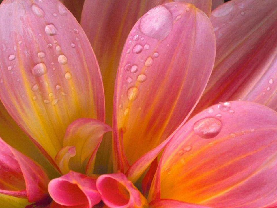 Lorsque vous vous trouvez en face d une fleur, que vous la regardez, que vous sentez son parfum, la sérénité vous envahit et la douceur touche votre coeur.