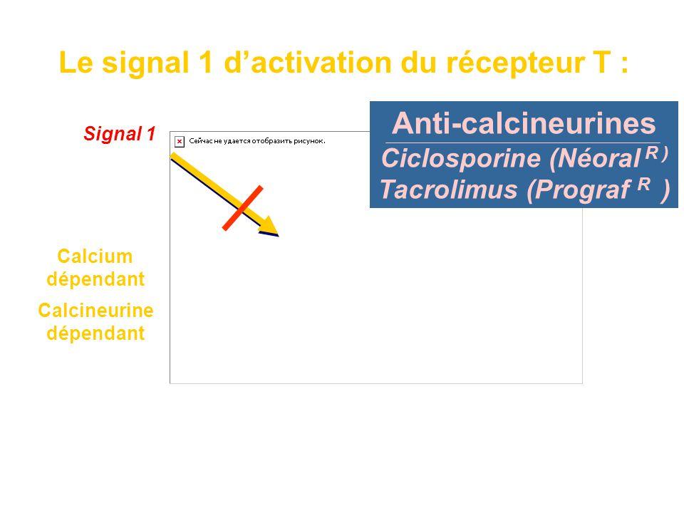 Calcium dépendant Calcineurine dépendant Fixation du facteur de transcription NFAT sur les promoteurs de gènes de cytokines Le signal 1 d'activation d