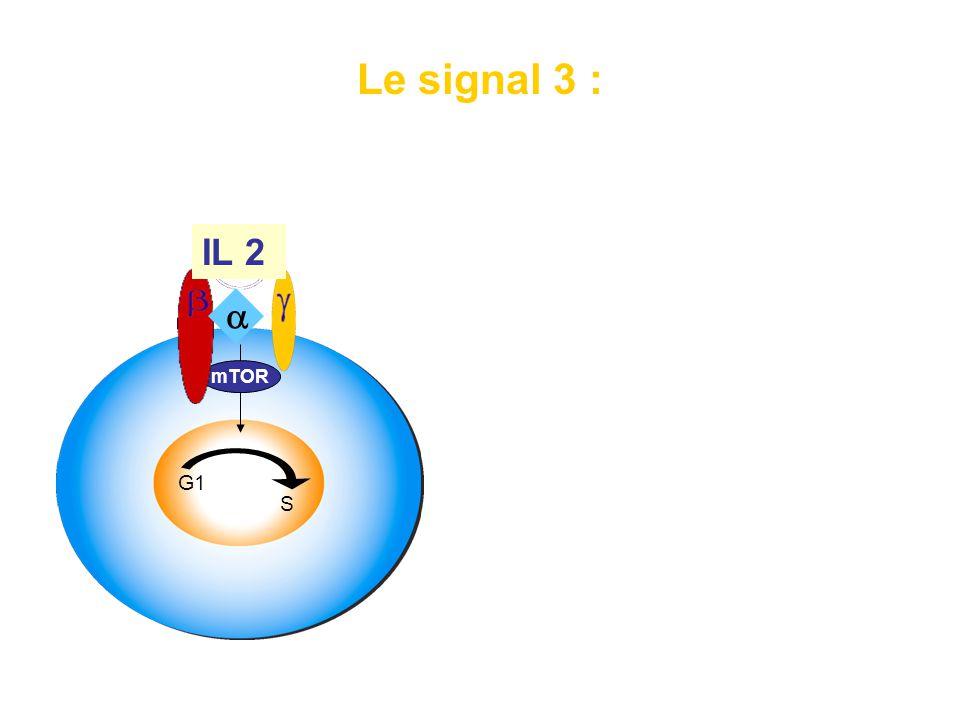 Le signal 3 : signal de progression du cycle cellulaire G1 S mTOR •Synthèse de protéines de progression du cycle cellulaire • mTOR dépendant (+++) •Pa