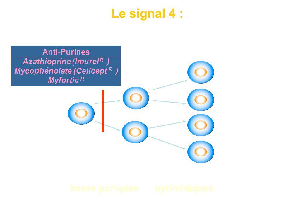 Nécessite la synthèse d'acides nucléiques à partir de bases puriques ou pyrimidiques signal de mitose et de prolifération clonale Le signal 4 : Anti-P