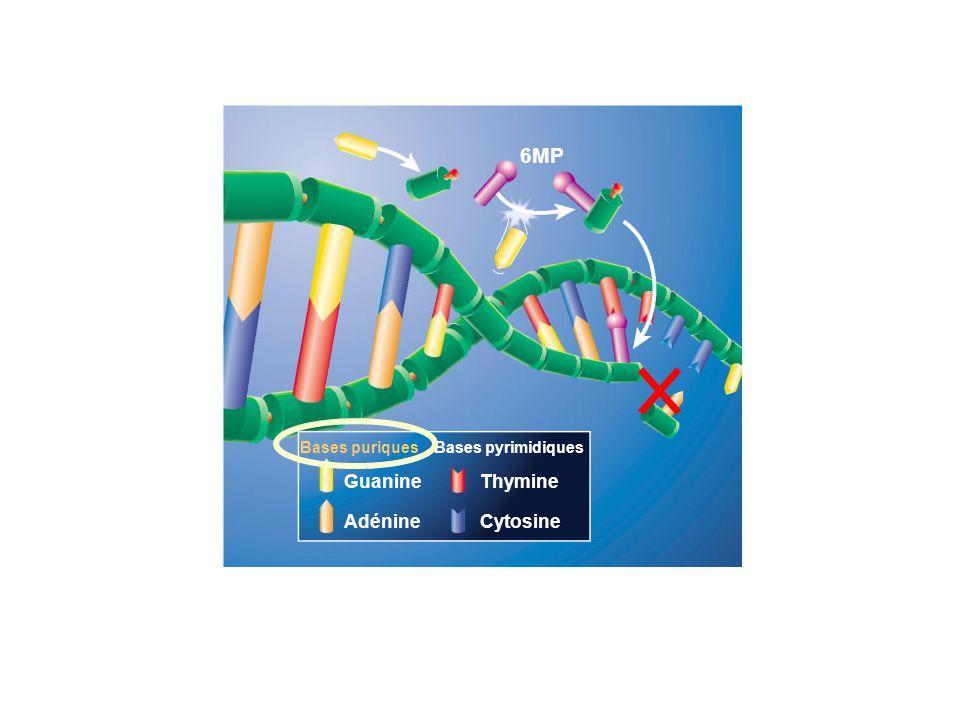 Bases puriquesBases pyrimidiques Guanine Adénine Thymine Cytosine 6MP Schémas proposés par les Laboratoires Novartis