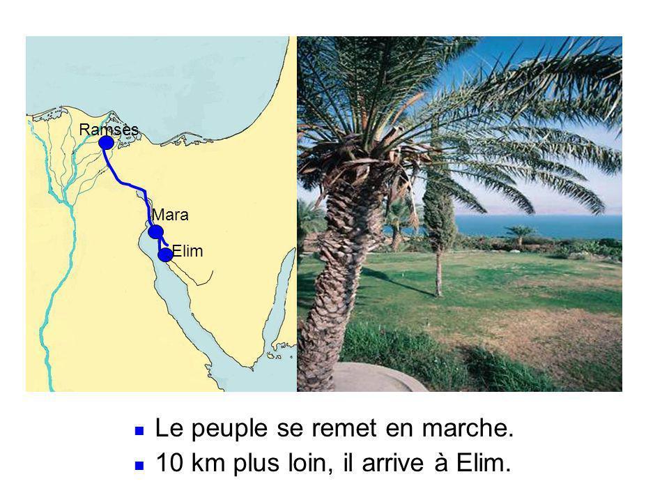 Ramsès Mara Elim  Le peuple se remet en marche.  10 km plus loin, il arrive à Elim.