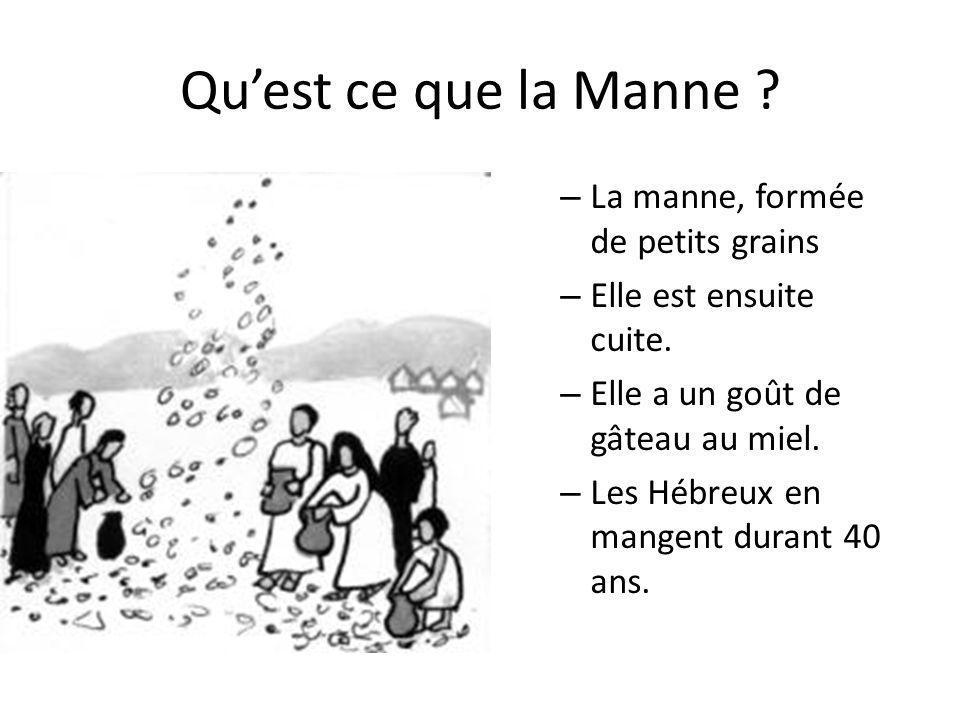 Qu'est ce que la Manne .– La manne, formée de petits grains – Elle est ensuite cuite.