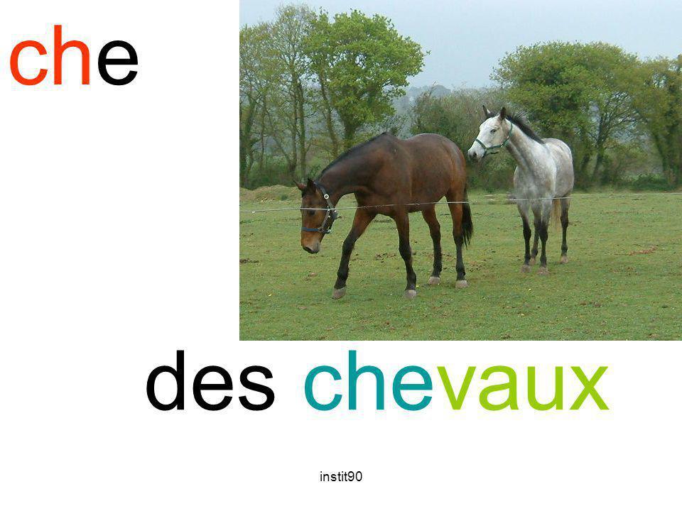 instit90 che cheval des chevaux