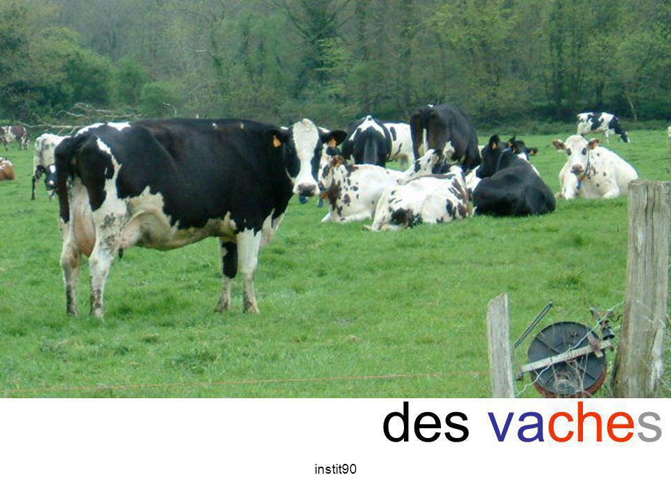 instit90 che vache des vaches