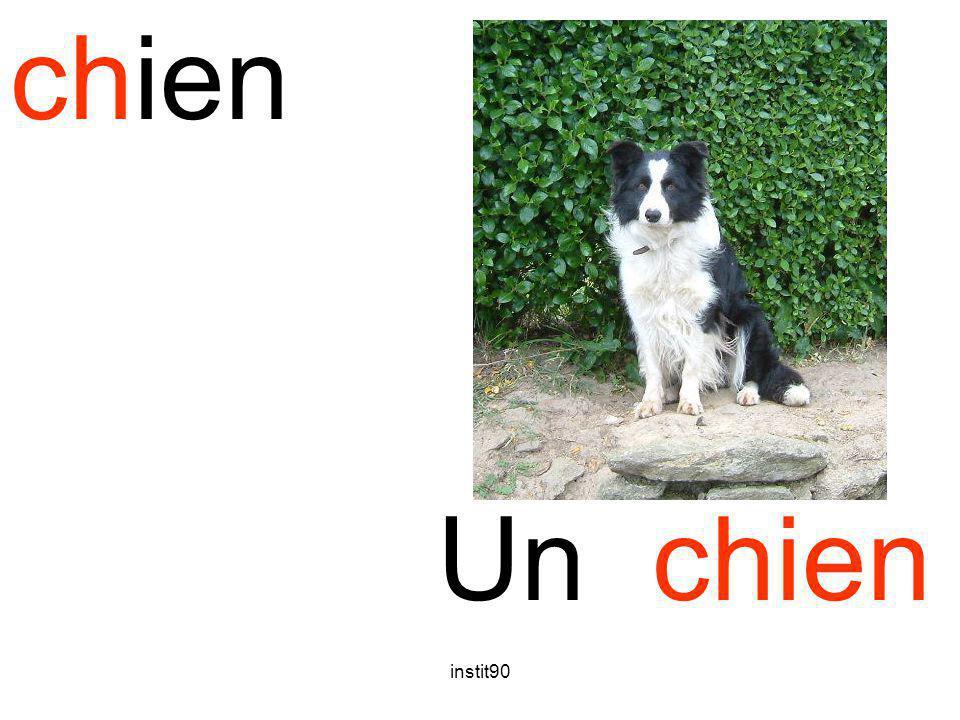 instit90 chien Un chien