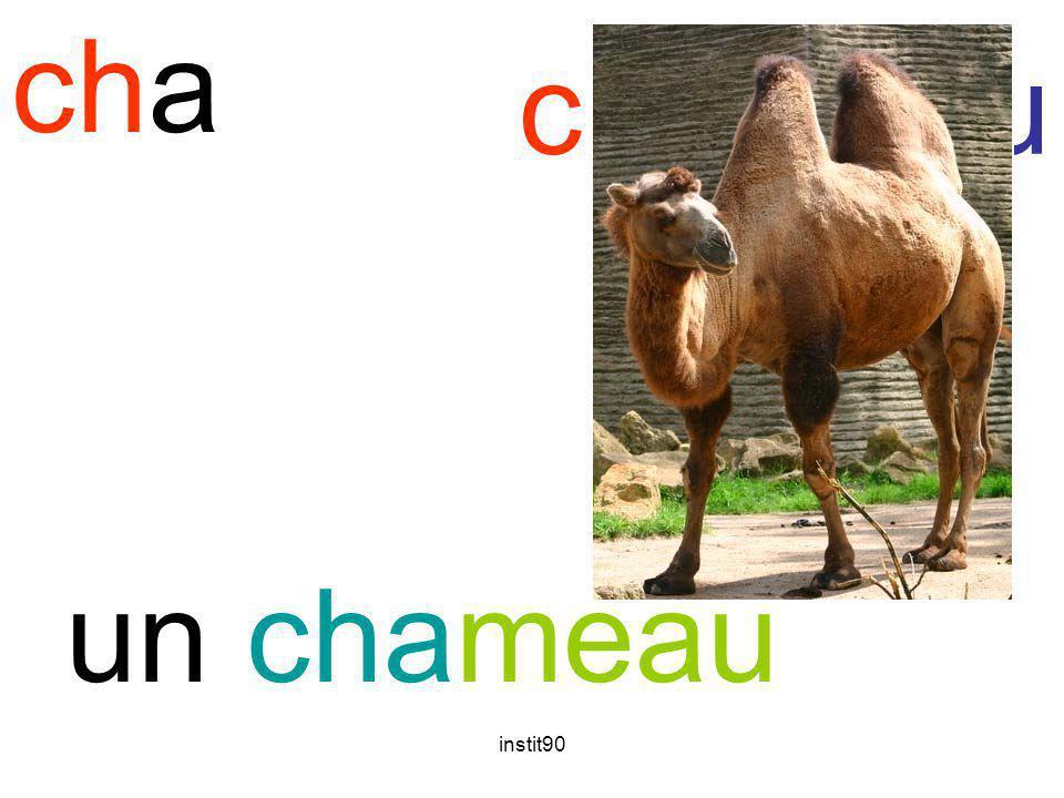 instit90 cha chameau un chameau