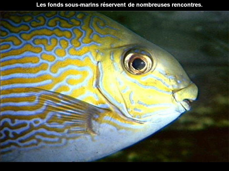 Les fonds sous-marins réservent de nombreuses rencontres.