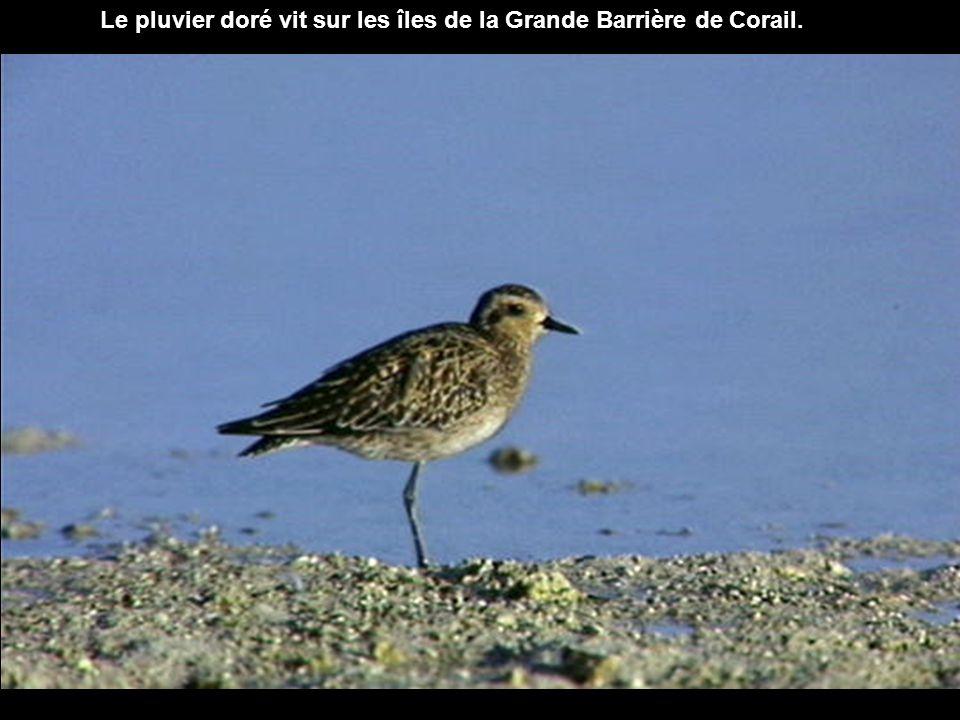 242 espèces d oiseaux vivent en ces lieux.