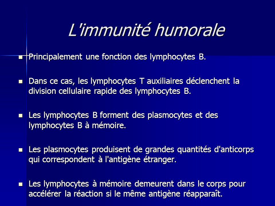L'immunité humorale  Principalement une fonction des lymphocytes B.  Dans ce cas, les lymphocytes T auxiliaires déclenchent la division cellulaire r