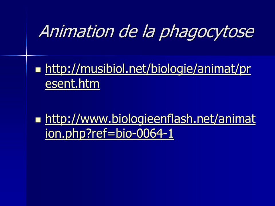 Animation de la phagocytose  http://musibiol.net/biologie/animat/pr esent.htm http://musibiol.net/biologie/animat/pr esent.htm http://musibiol.net/bi